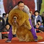 Chineses vendem cachorro por leão africano em zoológico