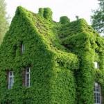 As fachadas e paredes verdes dos modernos prédios e edifícios