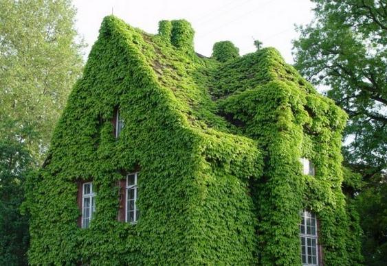 Plantas nas paredes e telhado