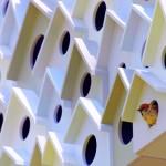 Condomínio de luxo com casas e apartamentos para passarinhos