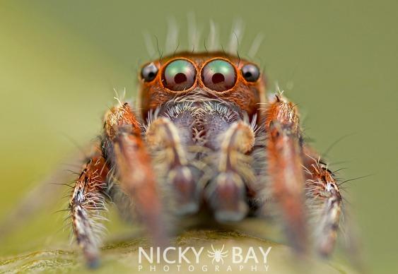 Olhar aracnídeo