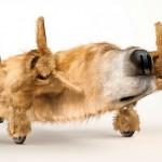 Já pensou se o seu cãozinho de estimação virasse um avião?