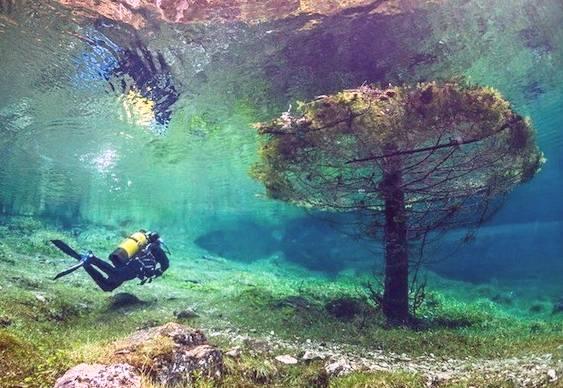 Floresta Submersa