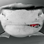 Tubarões com cara zangada e sorriso maroto… só pode ser fome!