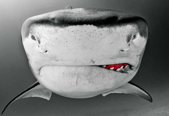 Dentes de tubarão