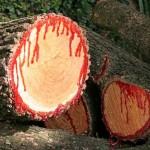Você derrubaria as árvores se todas elas sangrassem como nós?