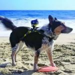 Câmera filmadora Sony com correia para instalar no dorso de cachorros