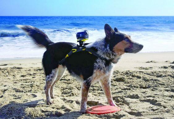 Filmadora para cães