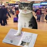 Cães e gatos terão passaporte brasileiro para viajar ao exterior
