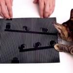 Ilusões de ótica tão perfeitas que enganam até um gatinho
