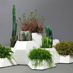 Design geométrico de colmeia transforma em oásis conjunto de vasos