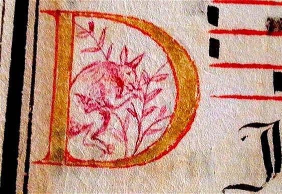 Desenho de canguru em manuscrito