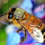 Mochila com sensor eletrônico pode salvar abelhas da extinção