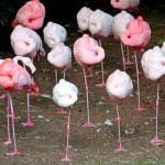 Por que flamingos se equilibram numa perna quando ficam parados?