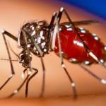 Chikungunya é mais um motivo para se preocupar com o calor