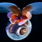 Estranhas formas de vida marinha revelam segredos do abismo
