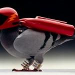 Pombo dá show de pilotagem aérea numa estrada cheia de carros