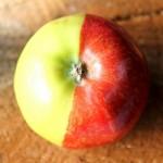 Achar uma maçã com duas cores é como acertar na loteria