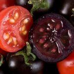 Tomate preto pode prevenir diabetes, obesidade e até câncer