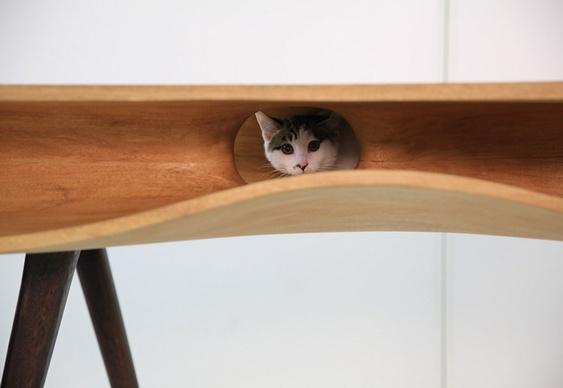 Esconderijo de felinos