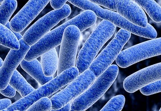 Antibióticos oceânicos