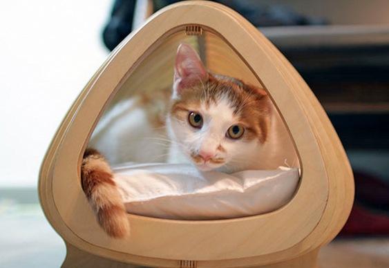 Ninho de gatos
