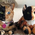 Venus, a gata de duas caras ou cores, ganha clone de pelúcia