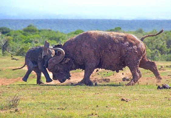 Você já viu um elefante voador?
