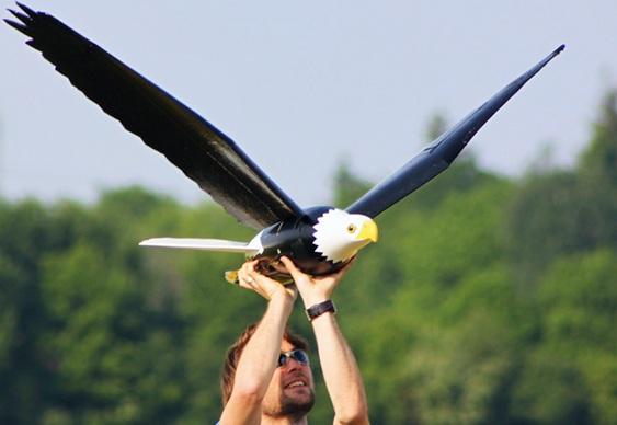 Drones imitam águias e gaviões