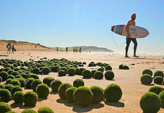 OFNIs australianos ou ovos alienígenas?