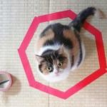 Por que motivo os gatos gostam de sentar dentro de círculos?