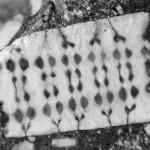 Microchip incrustado em pedra formada há 250 milhões de anos