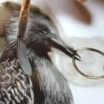 Desenho frágil como um passarinho… detonando uma granada