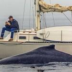 Sujeito distraído com celular não viu baleia passar ao seu lado