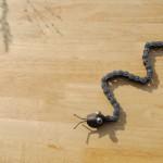 Cobras, lagartos e outros bichos feitos com correntes de bicicletas