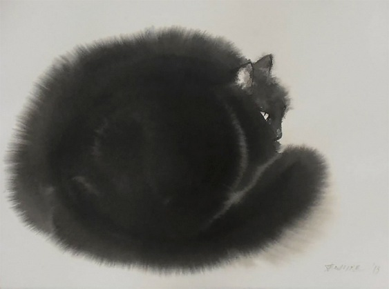 Gato enroscado