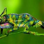 Mimetismo de um lagarto através da pintura corporal humana