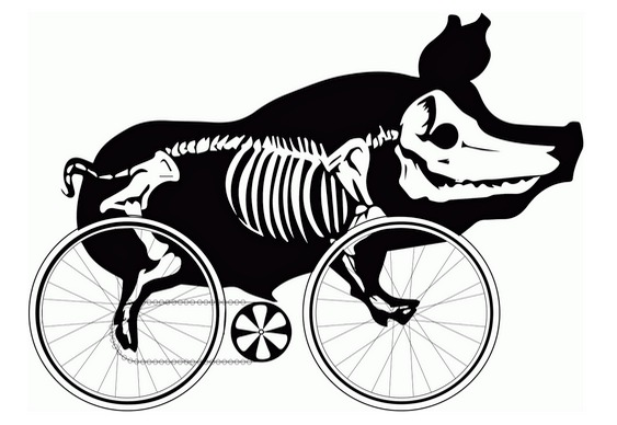 Porco pedalando bike