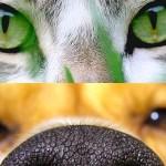 No Brasil a proporção é de dois cachorros para cada gato