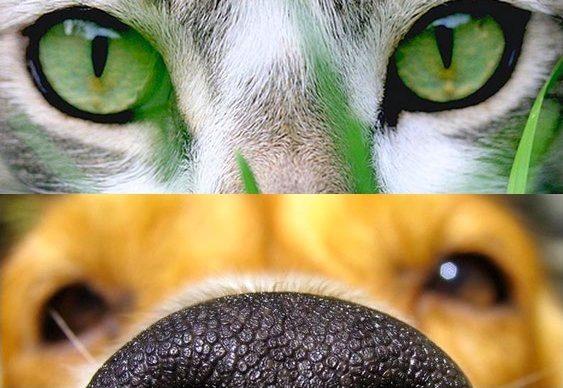 Quantos cães e gatos tem no Brasil