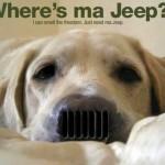 Vida de jipeiro é o cão, farejando o cheiro da liberdade