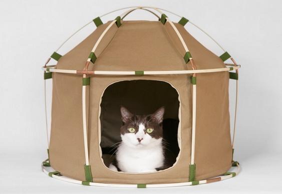 Camping com gato