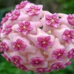 Sequência de Fibonacci na simetria geométrica das plantas