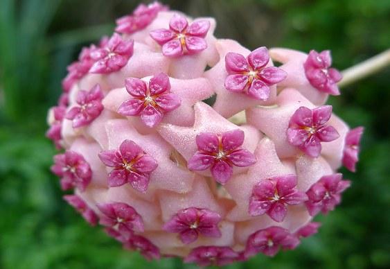 Simetria floral