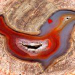 Passarinho de ágata escondido dentro de um geodo cristalino
