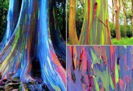 Troncos de árvores coloridas