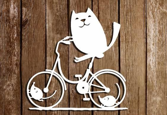 Gatinho andando de bike