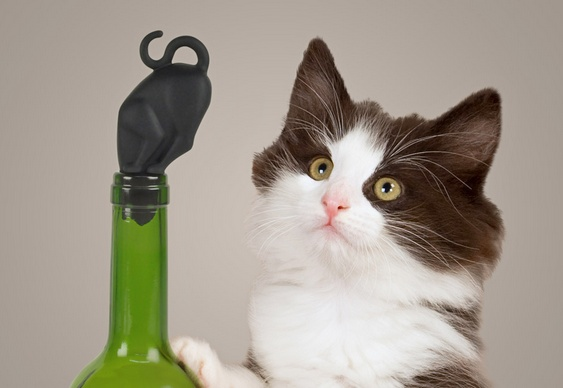 Gato preto de borracha