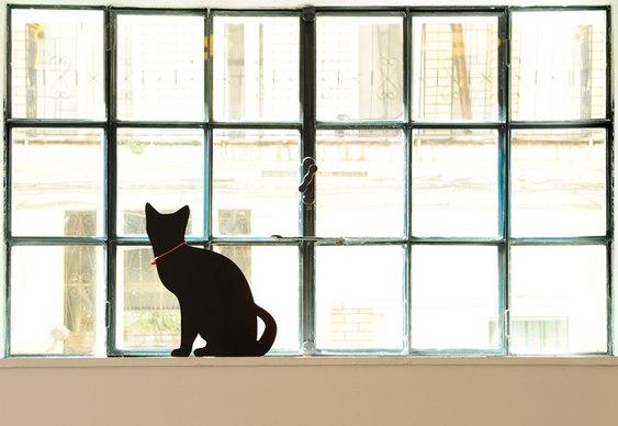 Silhueta de gato na iluminação