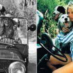 Brigitte Bardot – atriz, musa, defensora dos animais e… jipeira